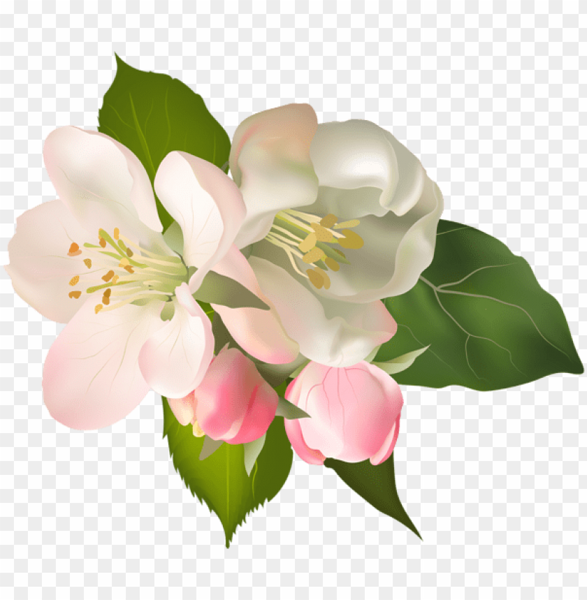 free PNG Download blossom spring fower png images background PNG images transparent