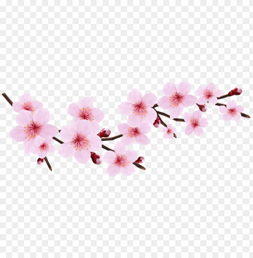 free PNG Download blossom spring pink twig transparent png images background PNG images transparent