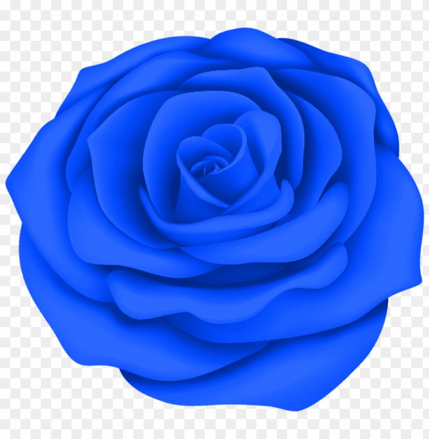 Download Blue Rose Flower Transparent Png Images Background Toppng