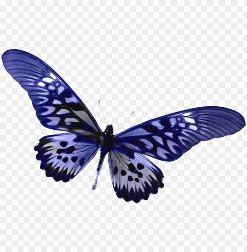Download Blue Transparent Butterfly Clipart Png Photo Toppng