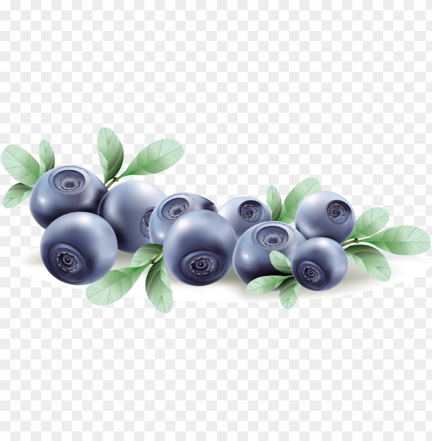 Blueberries Pictures Clip Art