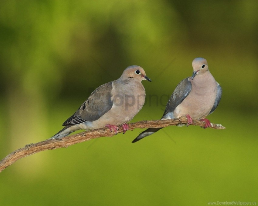 free PNG blurring, branch, grass, pigeons wallpaper background best stock photos PNG images transparent