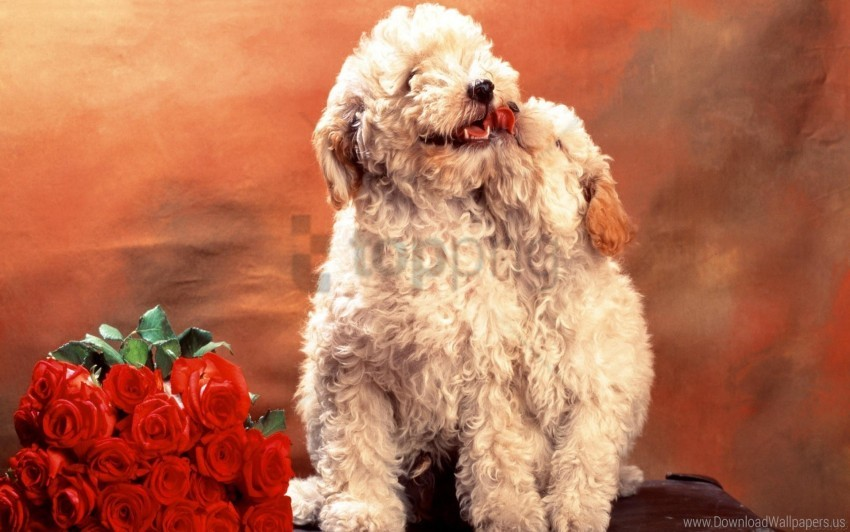 free PNG bouquet, dogs, flowers, hair, puppies, roses, wool wallpaper background best stock photos PNG images transparent