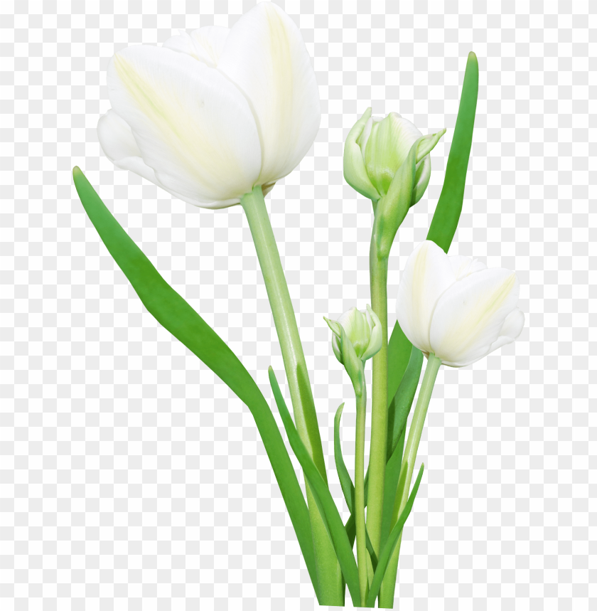 bouquet of flowers png - Free PNG Images | TOPpng