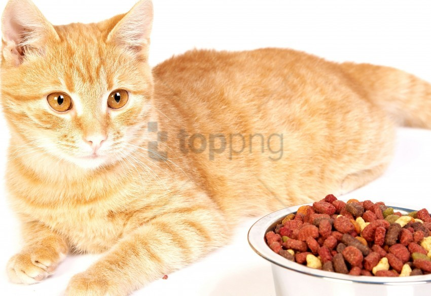 free PNG bowl, cat, food, metal, striped wallpaper background best stock photos PNG images transparent