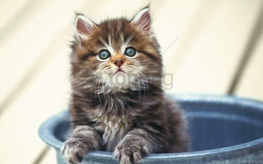free PNG bucket, fluffy, kitten, sitting, snout wallpaper background best stock photos PNG images transparent