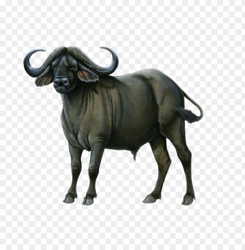 buffalo png free png images toppng clip art coffee pot clip art coffee mug