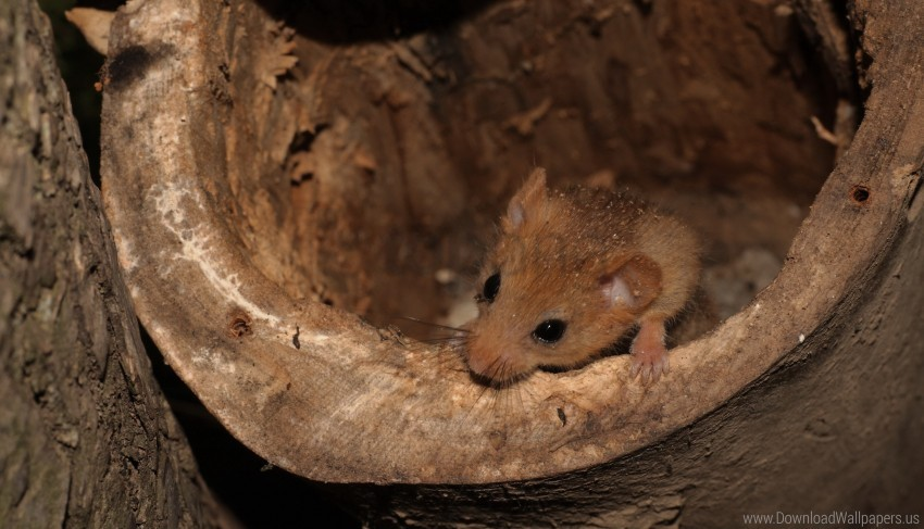 free PNG burrow, climb, dormouse wallpaper background best stock photos PNG images transparent