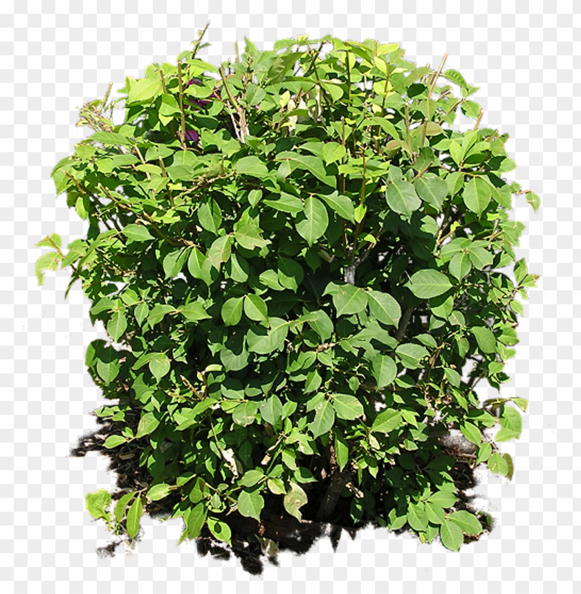 free PNG bush PNG image with transparent background PNG images transparent