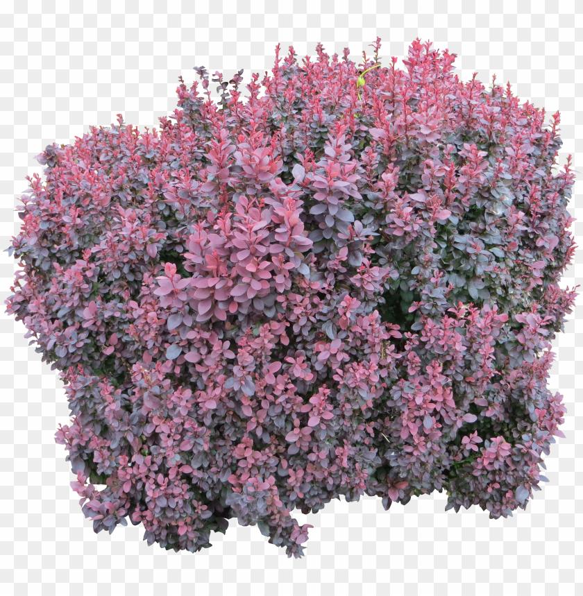 free PNG bush png image - pink flower bush PNG image with transparent background PNG images transparent
