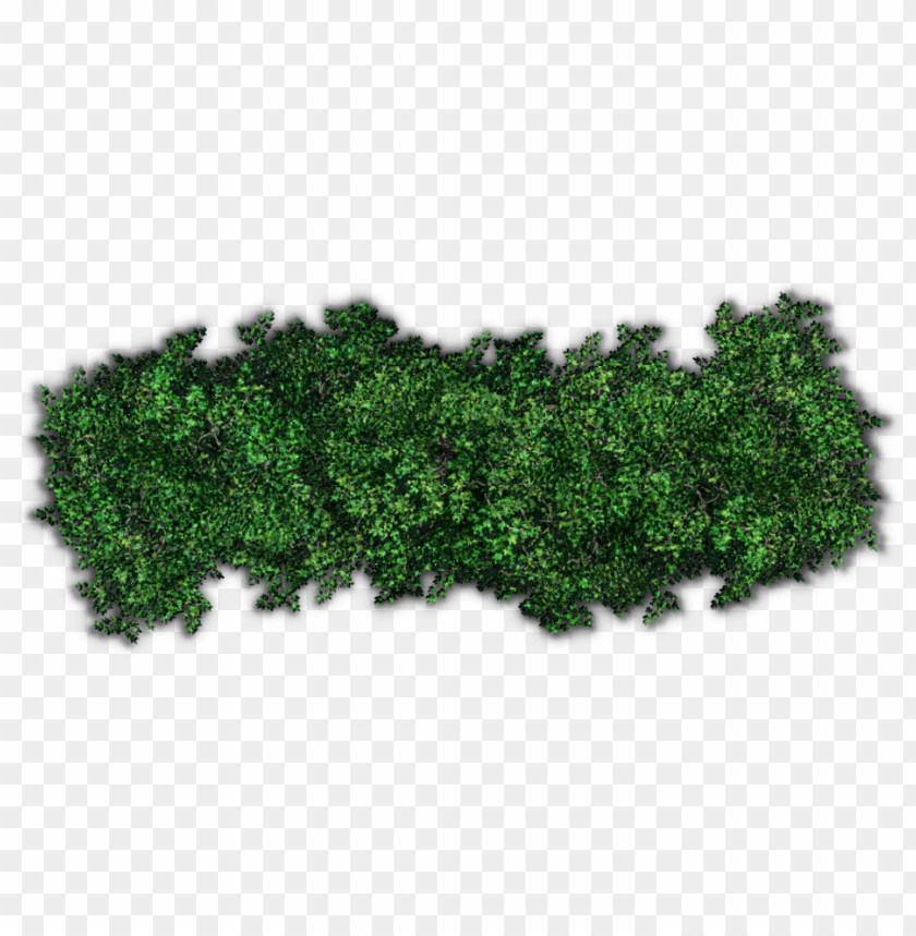 Download bushes png pic png images background | TOPpng
