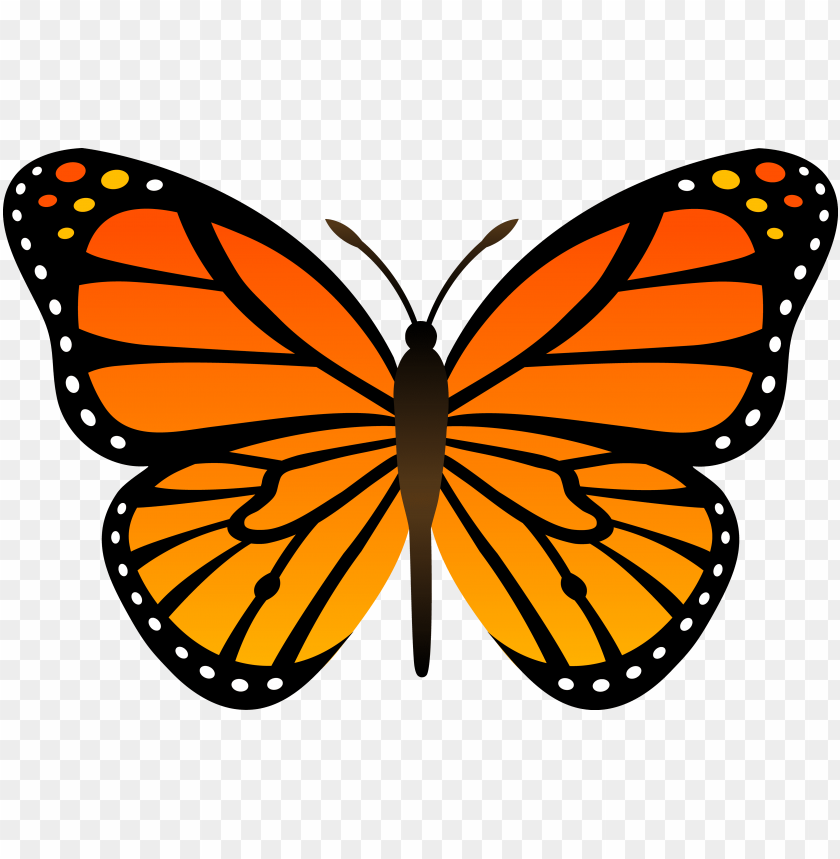Download Butterfly Clipart Png Photo Toppng