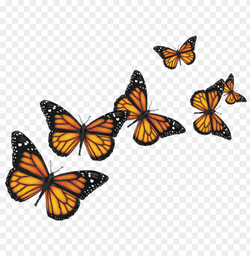 free png butterfly PNG images transparent