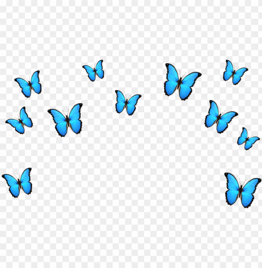 Butterfly Emoji Blue Crown Tumblr Cute Papilio Png