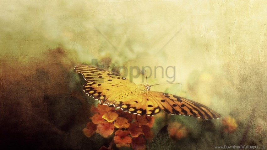 free PNG butterfly, flowers, white, wings wallpaper background best stock photos PNG images transparent