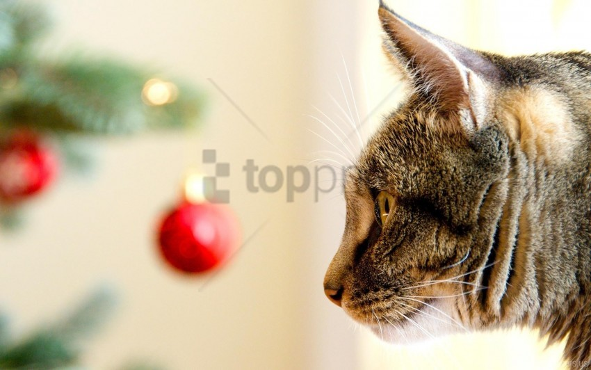 free PNG care, cat, christmas toys, muzzle, pro, view wallpaper background best stock photos PNG images transparent