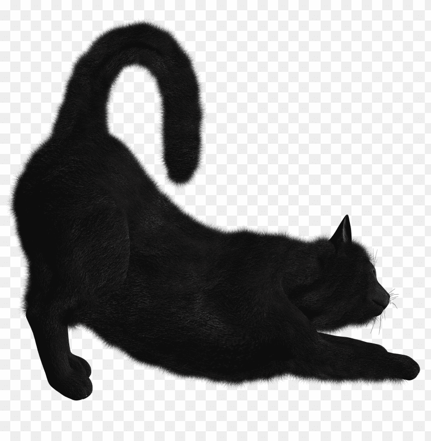 free PNG Download cat png images background PNG images transparent