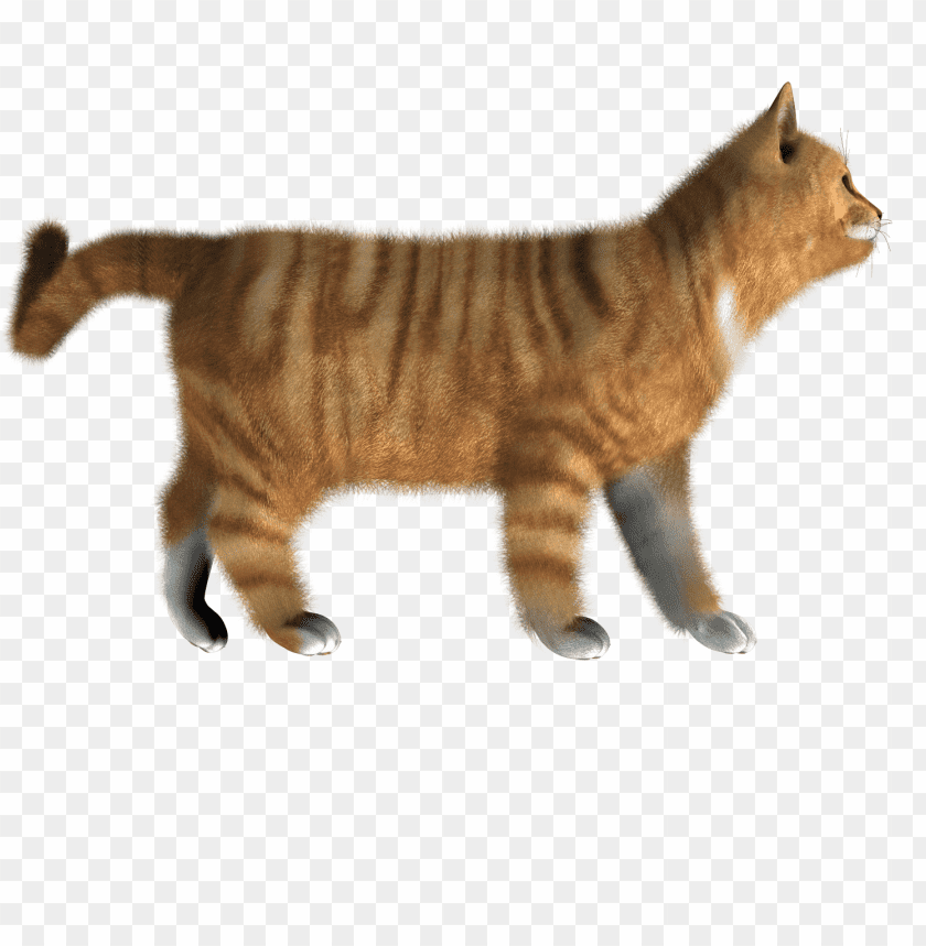 Download cat png images background@toppng.com