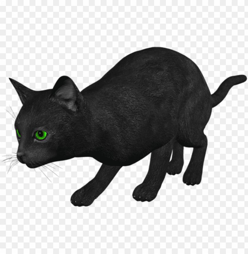 free PNG Download cat png images background PNG images transparent