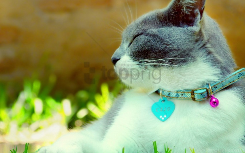 free PNG cat, collar, dazzling, light, spotted wallpaper background best stock photos PNG images transparent