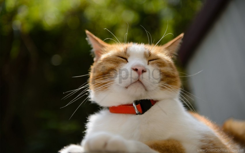 free PNG cat, collar, face, squint wallpaper background best stock photos PNG images transparent