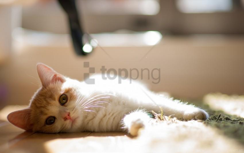 free PNG cat, curious, lie down, mat wallpaper background best stock photos PNG images transparent