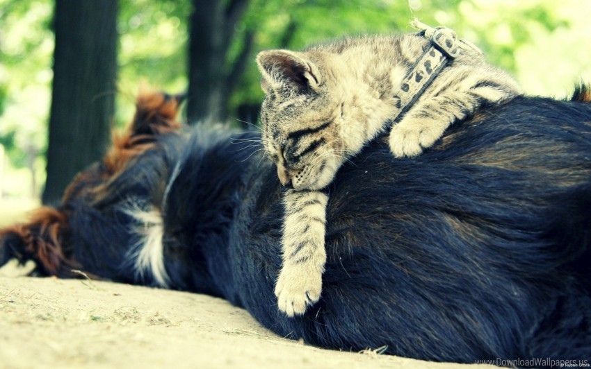 free PNG cat, dog, friends, sleeping wallpaper background best stock photos PNG images transparent