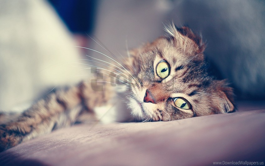 free PNG cat, down, face, glare, sad wallpaper background best stock photos PNG images transparent