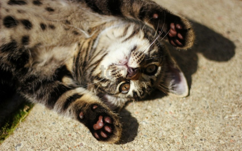 free PNG cat, down, paw, shadow wallpaper background best stock photos PNG images transparent