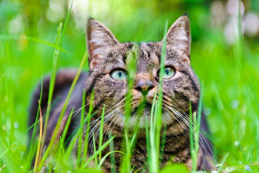 free PNG cat, eyes, face, grass wallpaper background best stock photos PNG images transparent