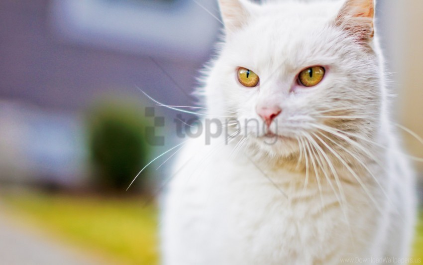 free PNG cat, eyes, face, white wallpaper background best stock photos PNG images transparent