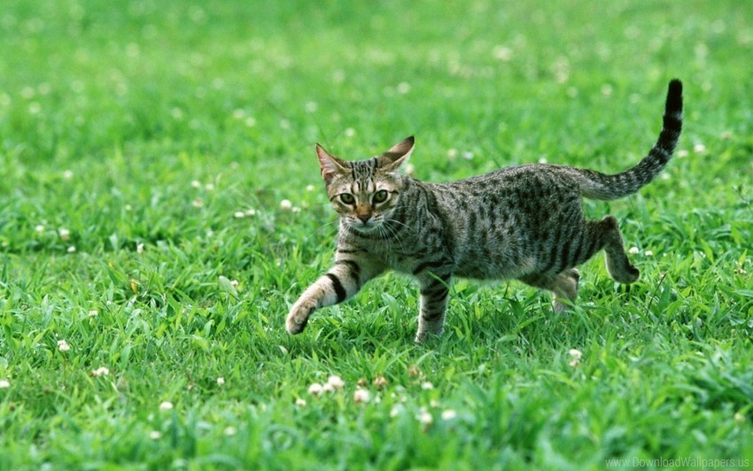 free PNG cat, eyes, grass, tabby wallpaper background best stock photos PNG images transparent