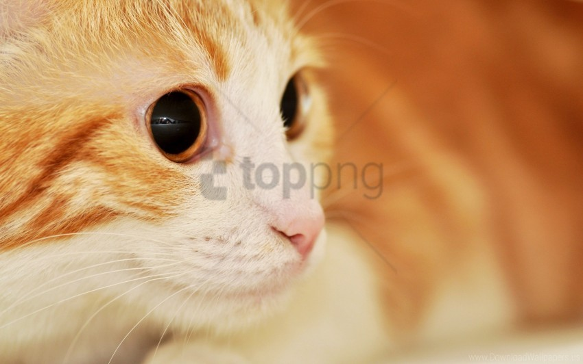 free PNG cat, eyes, muzzle, spotted, surprise wallpaper background best stock photos PNG images transparent