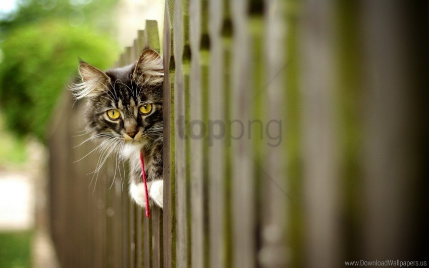 free PNG cat, face, fence, furry wallpaper background best stock photos PNG images transparent