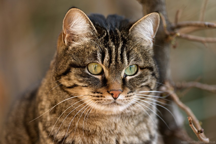 free PNG cat, face, handsome, kote, nose, twig, whiskers wallpaper background best stock photos PNG images transparent