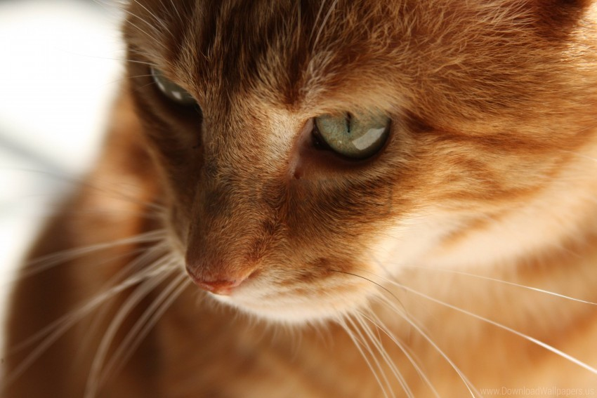 free PNG cat, face, kitten, red wallpaper background best stock photos PNG images transparent