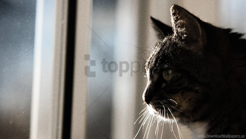free PNG cat, face, mustache, pro wallpaper background best stock photos PNG images transparent