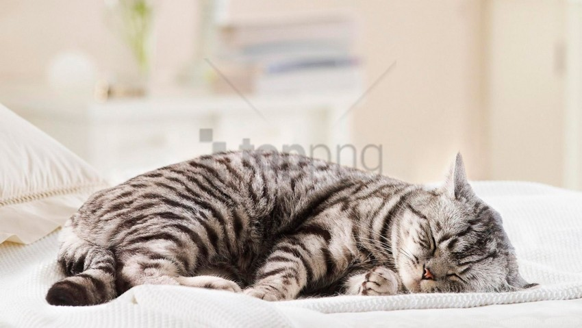 free PNG cat, fat, lie, striped wallpaper background best stock photos PNG images transparent