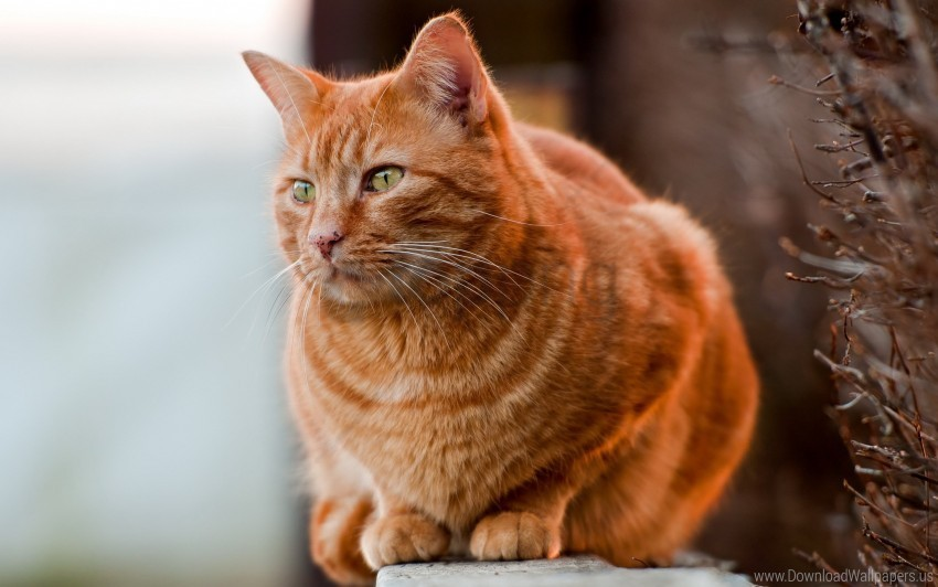 free PNG cat, fat, sit, watch wallpaper background best stock photos PNG images transparent