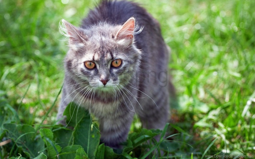 free PNG cat, funk, grass, striped wallpaper background best stock photos PNG images transparent