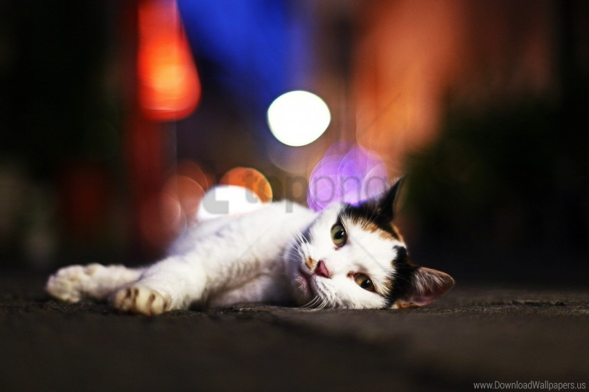 free PNG cat, glare, lying, sleepy wallpaper background best stock photos PNG images transparent