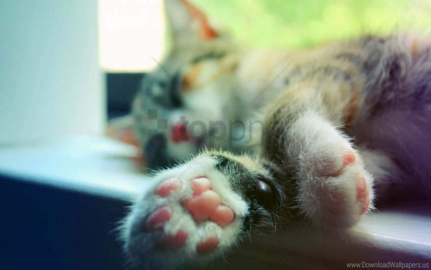free PNG cat, legs, macro, sleeping, window sill wallpaper background best stock photos PNG images transparent