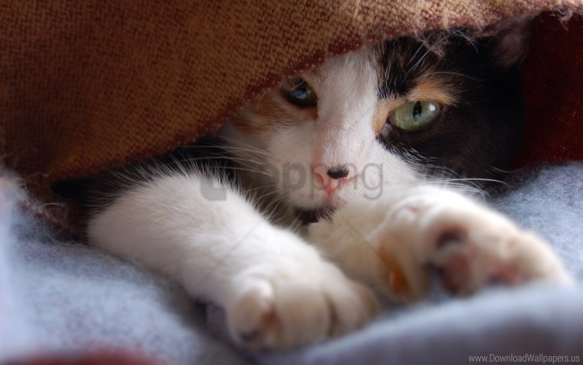 free PNG cat, legs, muzzle, spotted wallpaper background best stock photos PNG images transparent