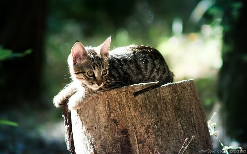 free PNG cat, light, lying, tree stump, wood wallpaper background best stock photos PNG images transparent