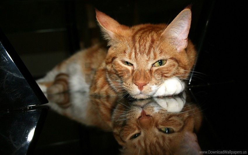 free PNG cat, muzzle, paw, red, tired wallpaper background best stock photos PNG images transparent