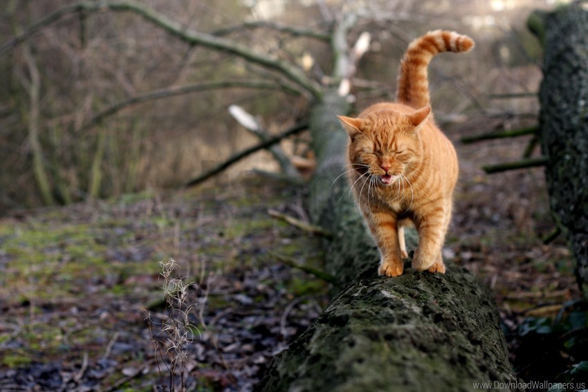 free PNG cat, red, tree, yawning wallpaper background best stock photos PNG images transparent