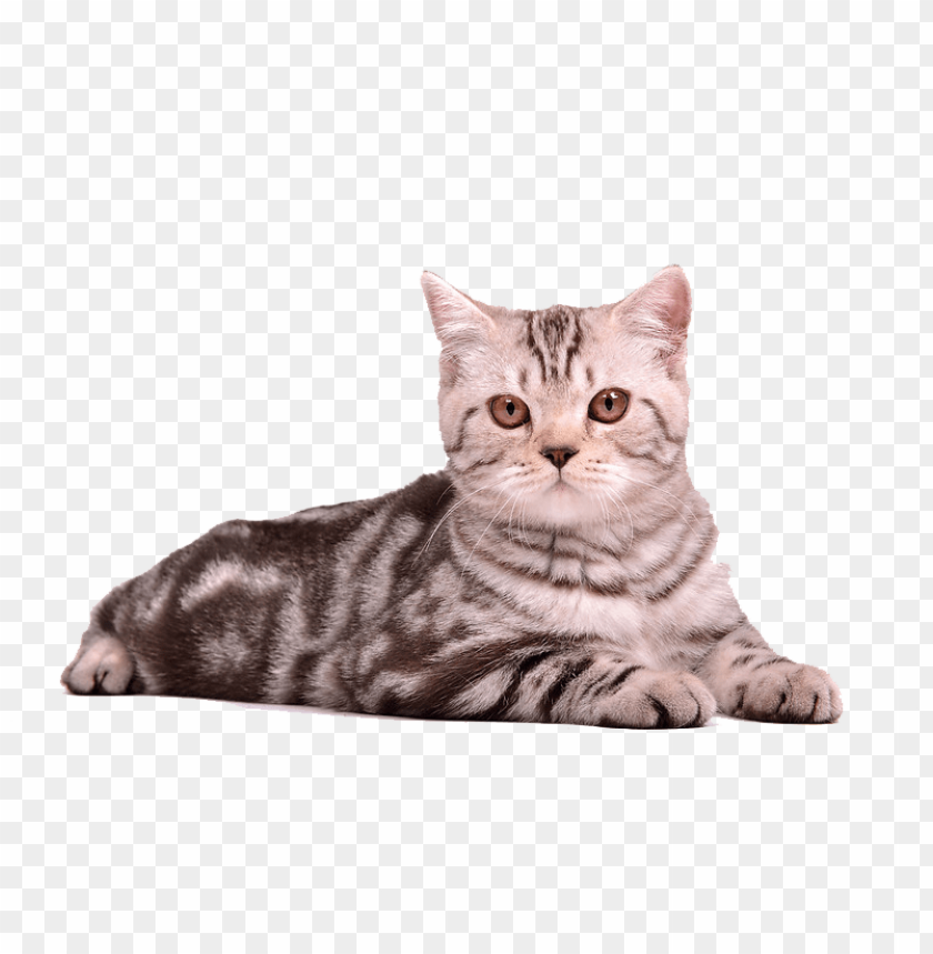 free png cat sitting png PNG images transparent