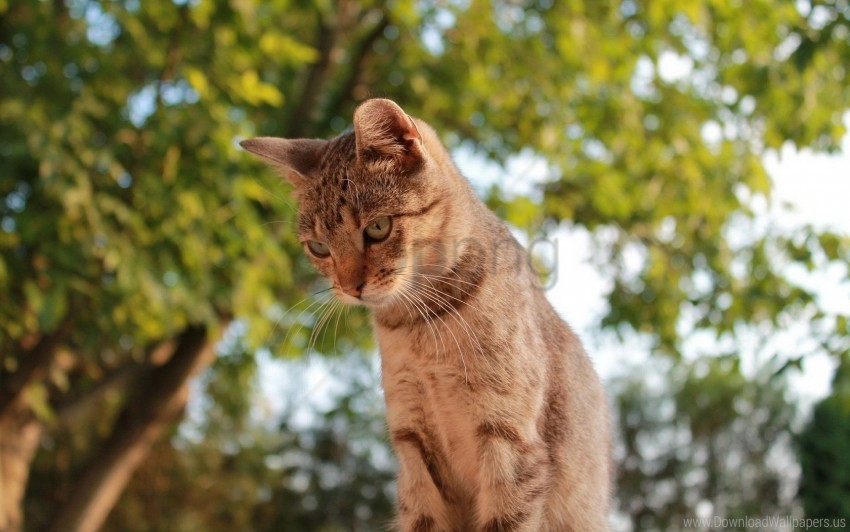 free PNG cat, sky, trees, view wallpaper background best stock photos PNG images transparent
