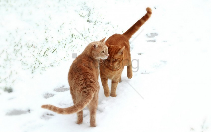 free PNG cats, couple, footprints, snow wallpaper background best stock photos PNG images transparent