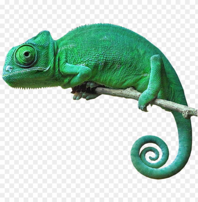 free PNG chameleon camouflage reptile lizard green freetoedit - chameleon with no background PNG image with transparent background PNG images transparent